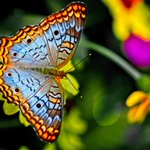 Did you know that butterflies only live for a few weeks? Next time you see one in nature, be sure to savor it!