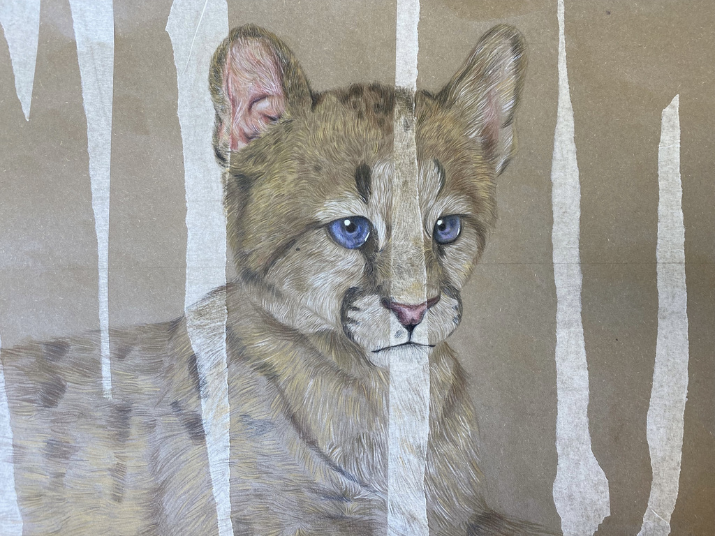 Anete in Y10 (20/21) has created an incredible photo realistic drawing of a cub, using watercolour pencil crayons.✏️The detail and textures of the fur are superb, showing patience and an understanding of techniques to replicate the photograph. Well done Anete!⭐️