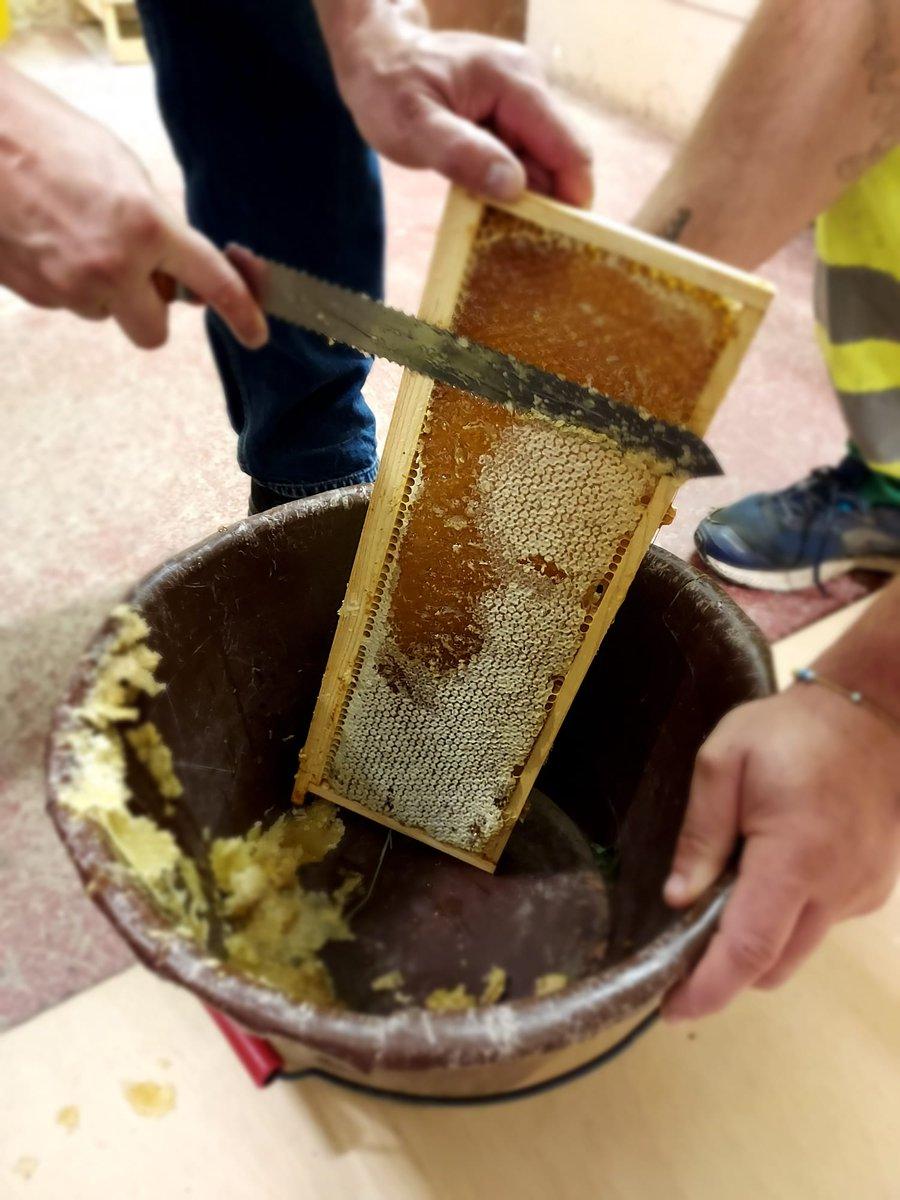 Extraction du #miel ce matin à la ferme des Iris de #Lormont. Le rucher, installé en 2018, donne un miel parfumé et fleuri grâce aux acacias situés à proximité ! Une dégustation sera proposée lors des futures animations à la ferme.#abeilles #nature #environnement #Gironde https://t.co/habqtaDMp2