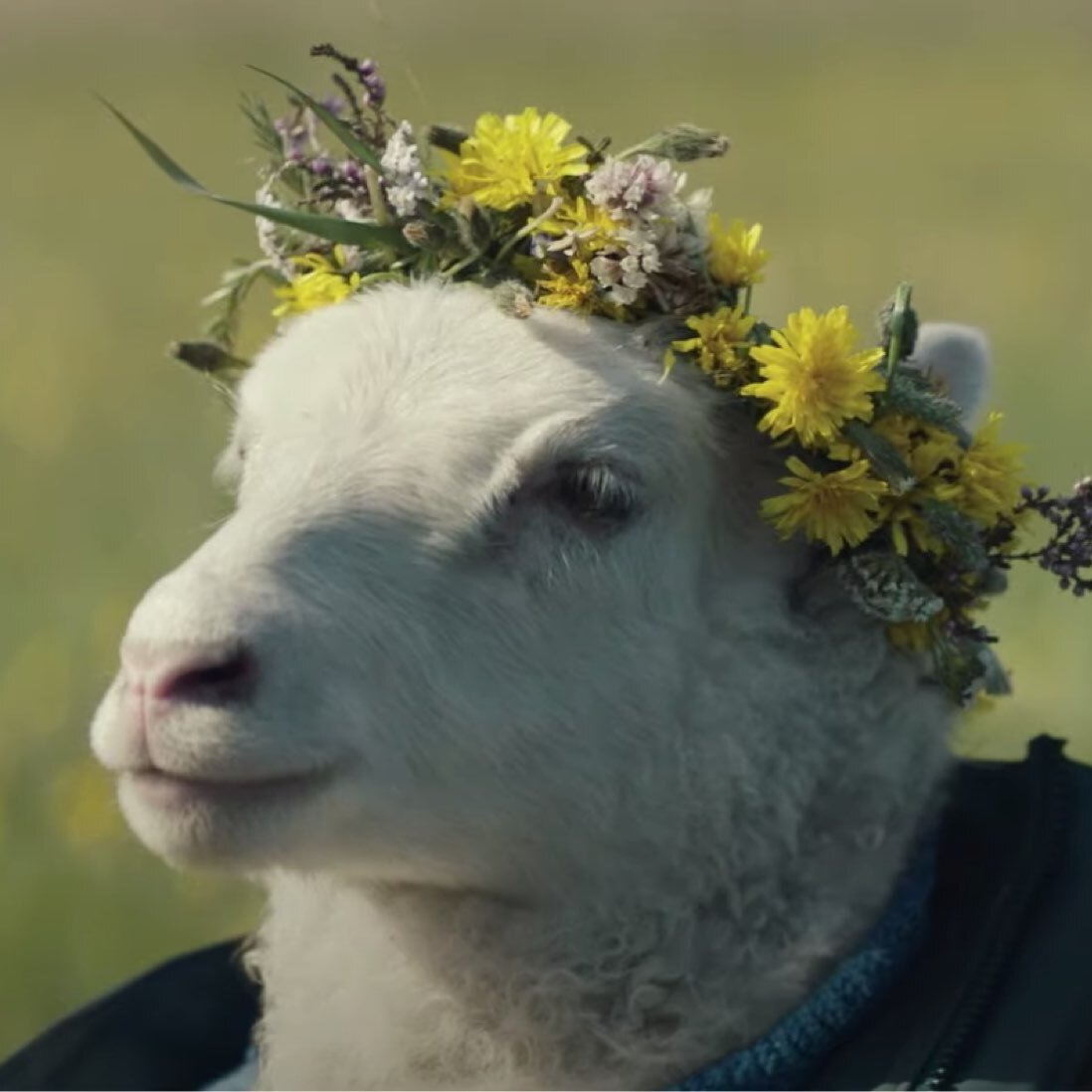 Photo of a lamb with a flower crown on it's head. Photo still is from an upcoming movie titled Lamb made by A24 Studios, makers of Hereditary and Midsommar.