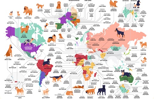 All the different dog breeds and where they are most popular on a map.. We love maps!