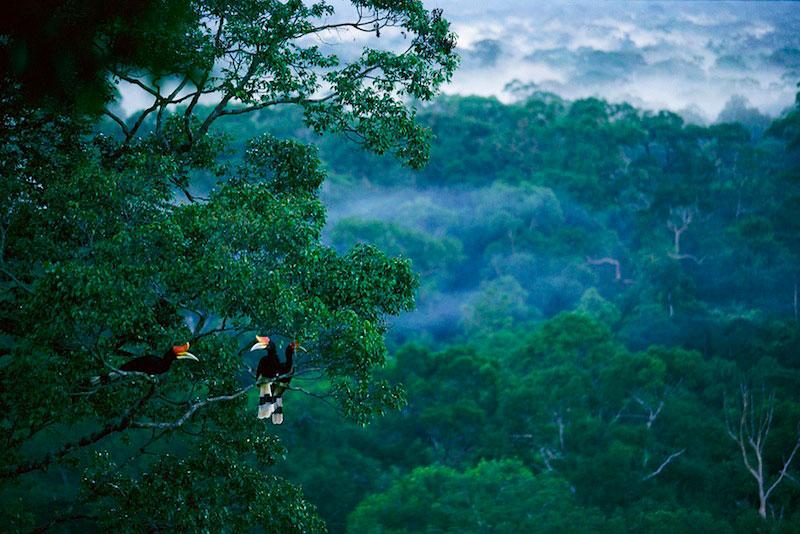 https://travel.okezone.com/read/2018/02/19/406/1861409/pohon-raksasa-ditemukan-di-hutan-kalimantan-selatan-besarnya-luar-biasa https://geotimes.id/opini/deforestasi-merusak-hutan-kalimantan/