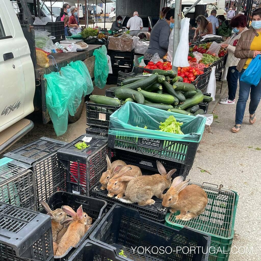 test ツイッターメディア - なぜか逃げない市場のウサギ。ポルトガルではウサギが一般的に食されています。 #ポルトガル https://t.co/etfwvoXyds