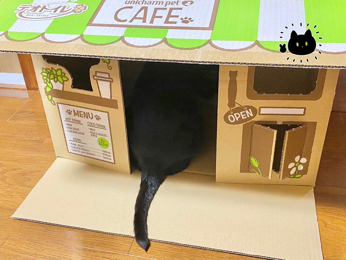 愛猫にカフェをプレゼント!しかし裏口が欲しくなった猫の行動に度肝を抜いた!w