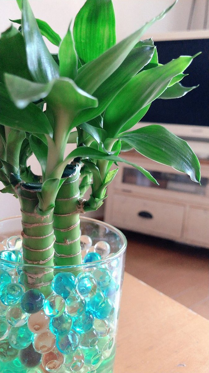 test ツイッターメディア - 観葉植物を枯らしてしまって・・・🥺  DAISOで揃えて アレンジして 作ってみました (⑅˃̵౪˂̵⑅)✨✨  #観葉植物 #DAISO #アレンジ https://t.co/LK4TAZoi1C
