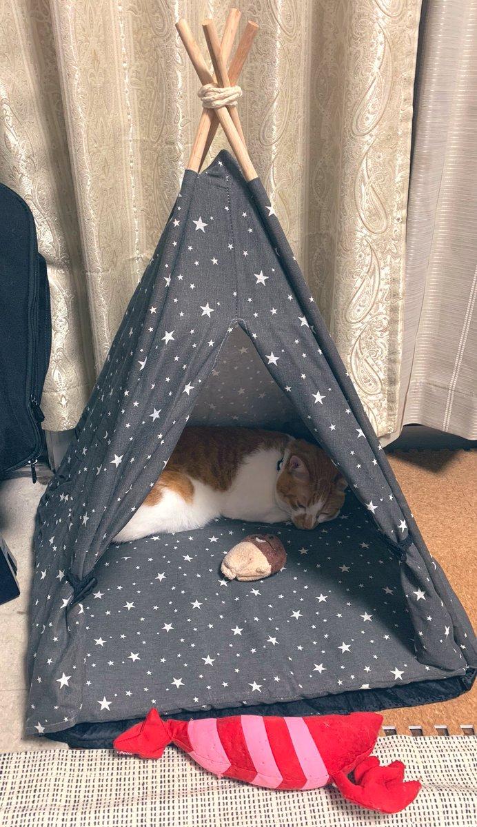 test ツイッターメディア - DAISOのペット用テント(500円)こんな感じ。#ダイソー https://t.co/Msll9e3Y5Y