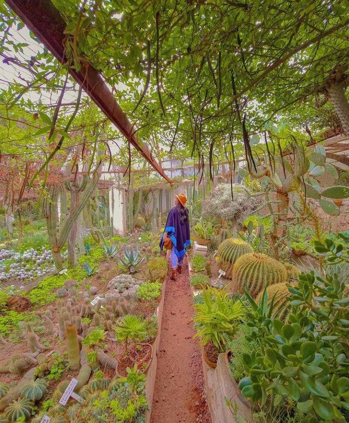RT @acontecer_: ☕☀️😷 Te deseamos #magníficojueves con una imagen del Jardín Botánico Regional en #CadereytadeMontes....