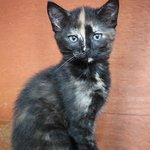 Image for the Tweet beginning: Cleopatra is an adorable kitten