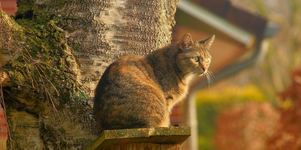 Isn`t it awesome?   #instacats #instapet #tagsforlikes #thedailykitten #instacat #photooftheday #cat #catclothes #catattire #kot #gato