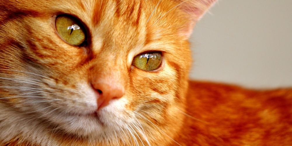 Great, huh?   #instacats #instapet #tagsforlikes #thedailykitten #instacat #photooftheday #cat #catclothes #catattire #kot #gato
