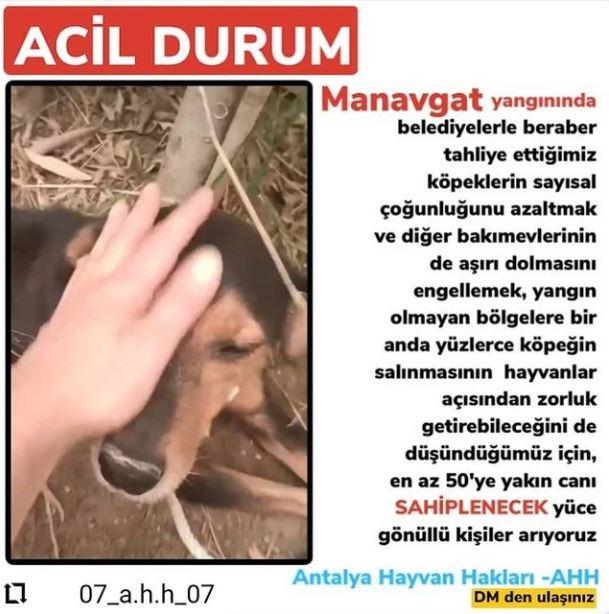 #masumcanlar #onlarabizeemanet #hayvanlar #hayvanlarıkoruyalım #hayvanhakları #dog #rescue #animals