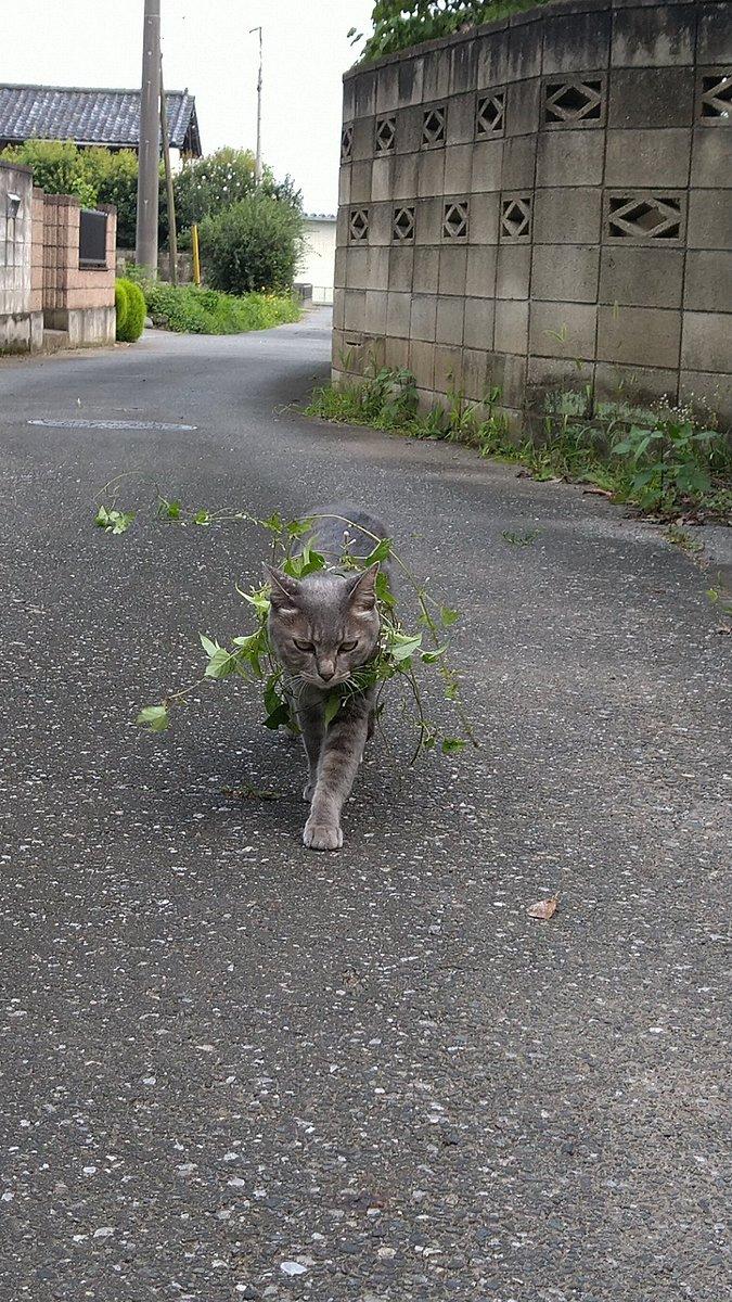 これは一石二鳥?散歩をしながら光合成をする猫!