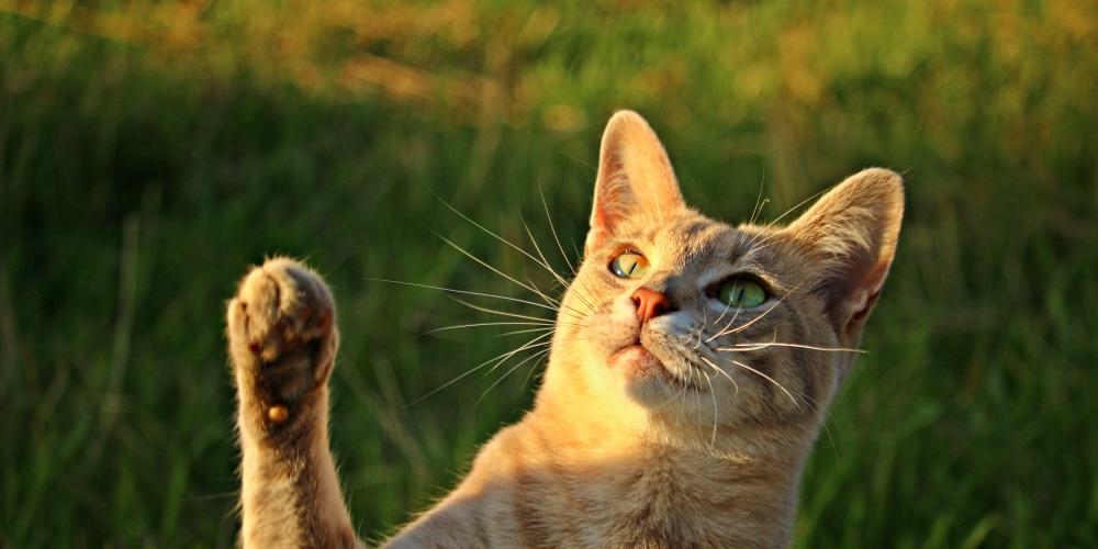 Who like it ?   #instacats #instapet #tagsforlikes #thedailykitten #instacat #photooftheday #cat #catclothes #catattire #kot #gato