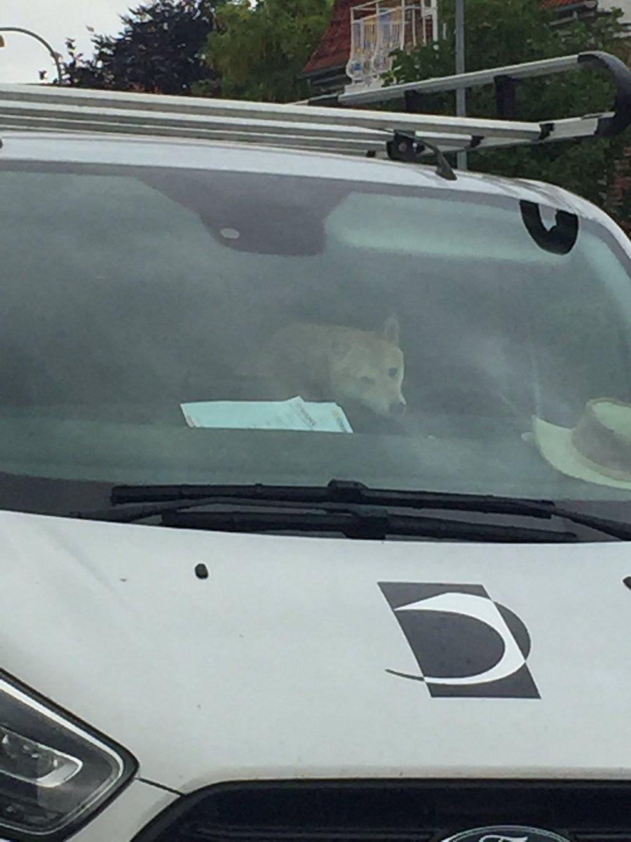 When you are late for work,  BUT IT'S A-OKA! Cause you see this ;u; shiba~~~ 💙💙💙💙💙💙💙💙💙  #shibainu #dog #doggo #happy