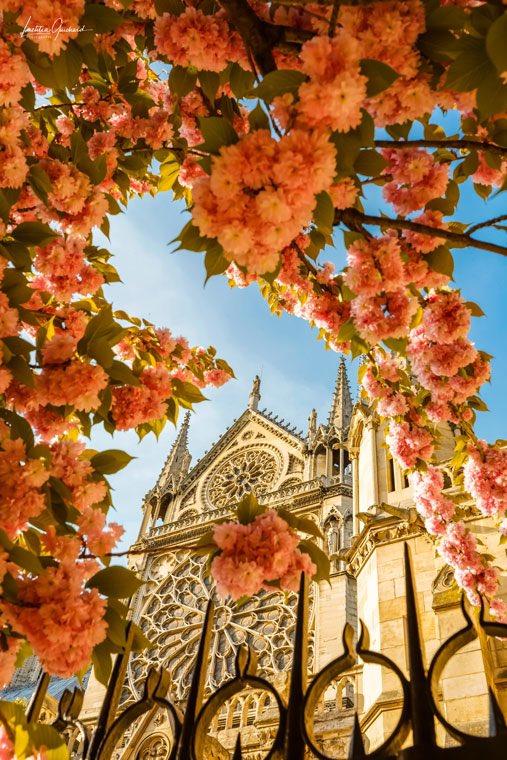 #paris #notredame #flower #bonjour #MagnifiqueFrance #canonstories #picoftheday #photooftheday