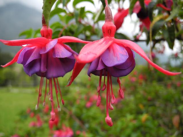 nature and her gifts 🌺  #nature #NaturePhotography #photography #photo #PicOfTheDay #flowerpower #ThursdayThoughts #ThursdayMotivation #motivation #candidshot #BiodiversityisOurLife #TEAMKOSMOS #environment