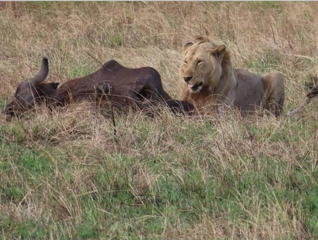 Website 👉  📧Email us @ info@savannahsurprisetravelconsultants.co.uk  #travel #nature #photography  #photooftheday #travelgram #picoftheday   #kenya #nairobi #africa  #igkenya  #nairobikenya   #tembeakenya  #iamnairobian