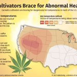 Image for the Tweet beginning: Learn how #cannabis growers can