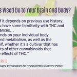 Image for the Tweet beginning: What does #weed do to