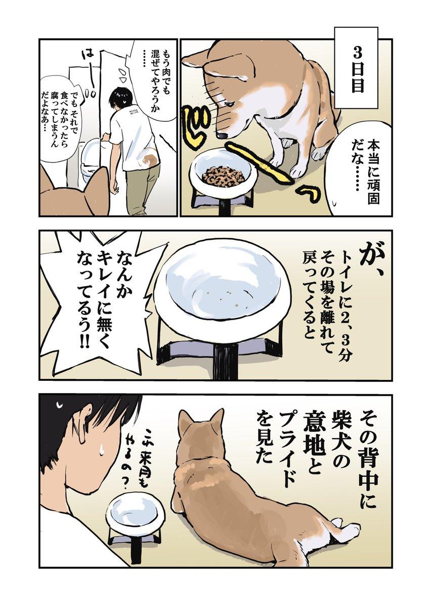薬を食べたくない犬と食べさせたい私の三日間戦争w勝者はどっち?