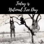 Image for the Tweet beginning: NATIONAL TREE DAY – A
