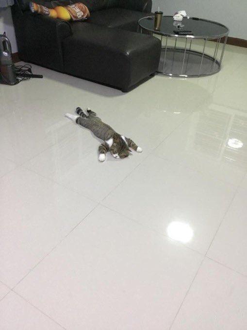 人間入ってないよね?床が冷たくて人みたいに寝転がる猫w