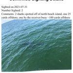 Image for the Tweet beginning: SHARK ALERT‼️ 2 sharks spotted