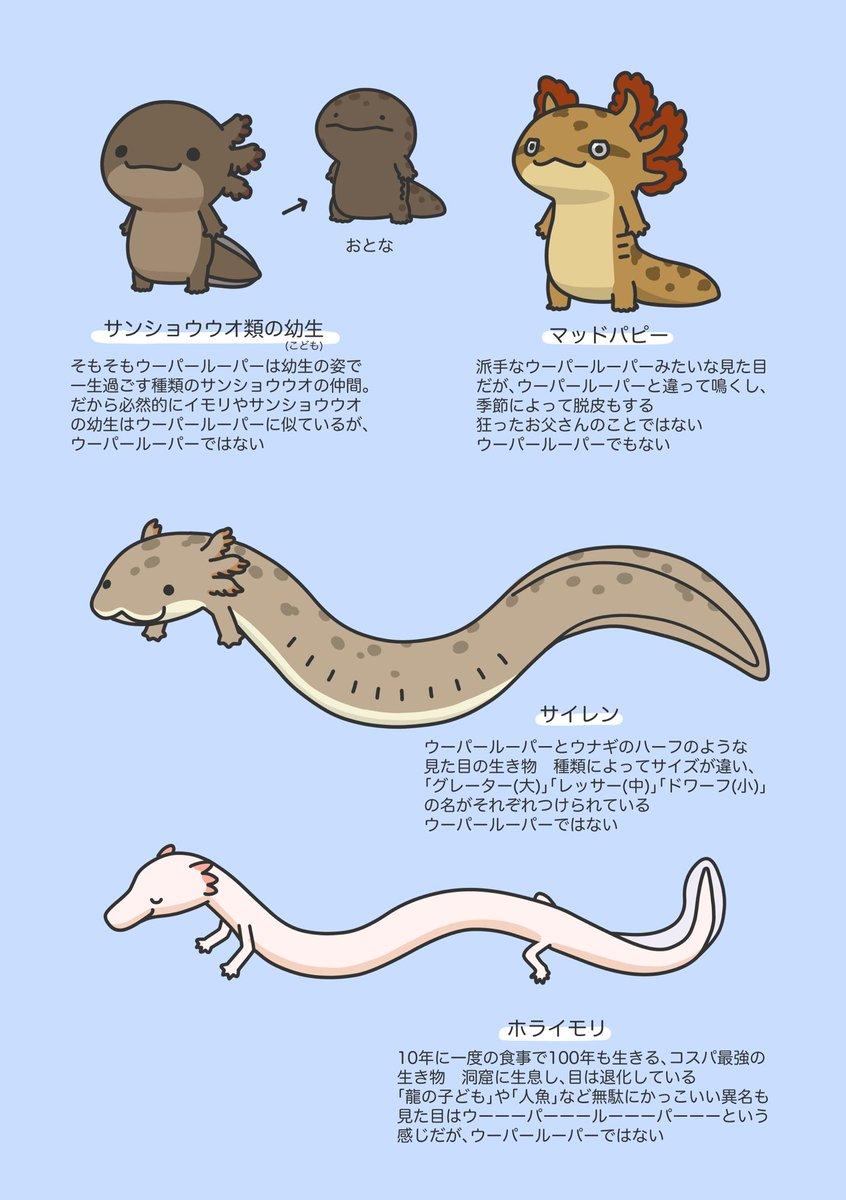 似ているけれど別の生き物?!ウーパールーパーにそっくりな生き物たち!
