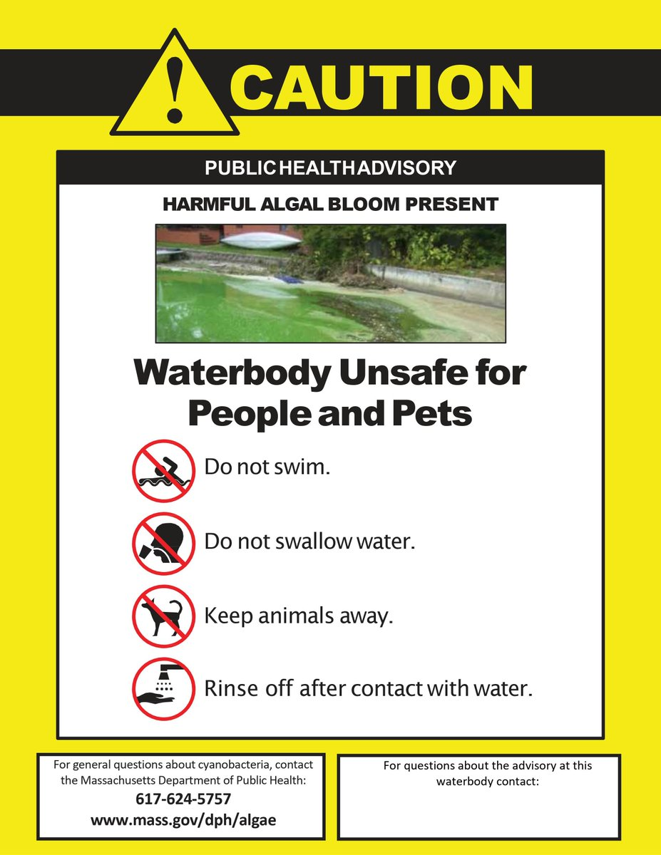 #FYI There is a Cyanobacteria bloom in #JamaicaPond. Cyanobacteria, or blue-green algae, are extremely harmful to humans and pets alike.