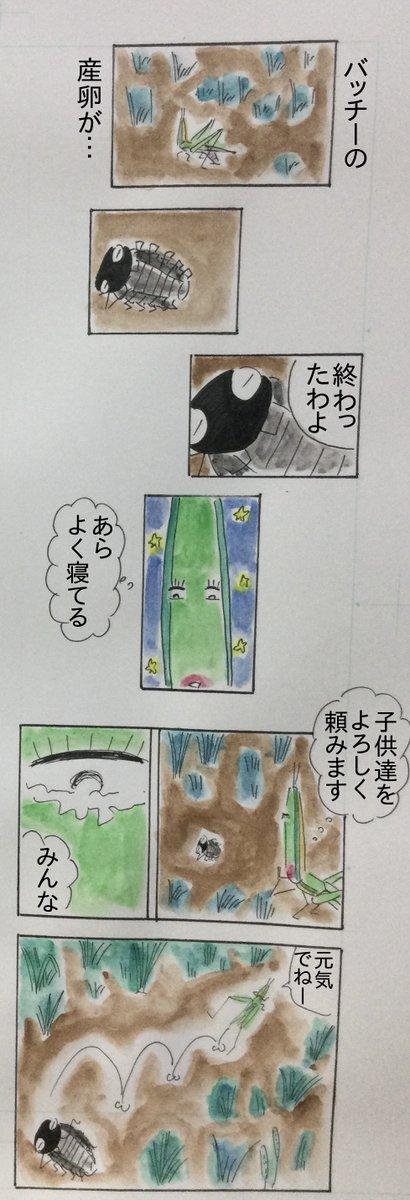 ころころダンゴ先輩 160話 #漫画 #マンガ #ムシ #ダンゴムシ #冬             春
