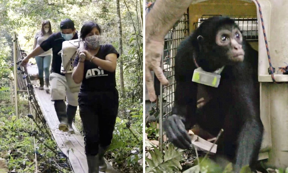 #ICYMI: Read about Maruja's journey back to the wild.   Thank you @WorldAnimalNews for sharing her story!  #StopCircusSuffering