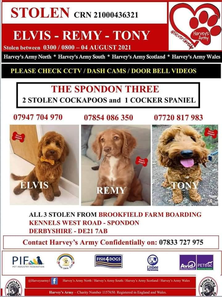 #Stolendogsuk the #Spondon3 stolen on 4 August 2021 from Brookfield Farm Kennels, Spondon #thespondonthree