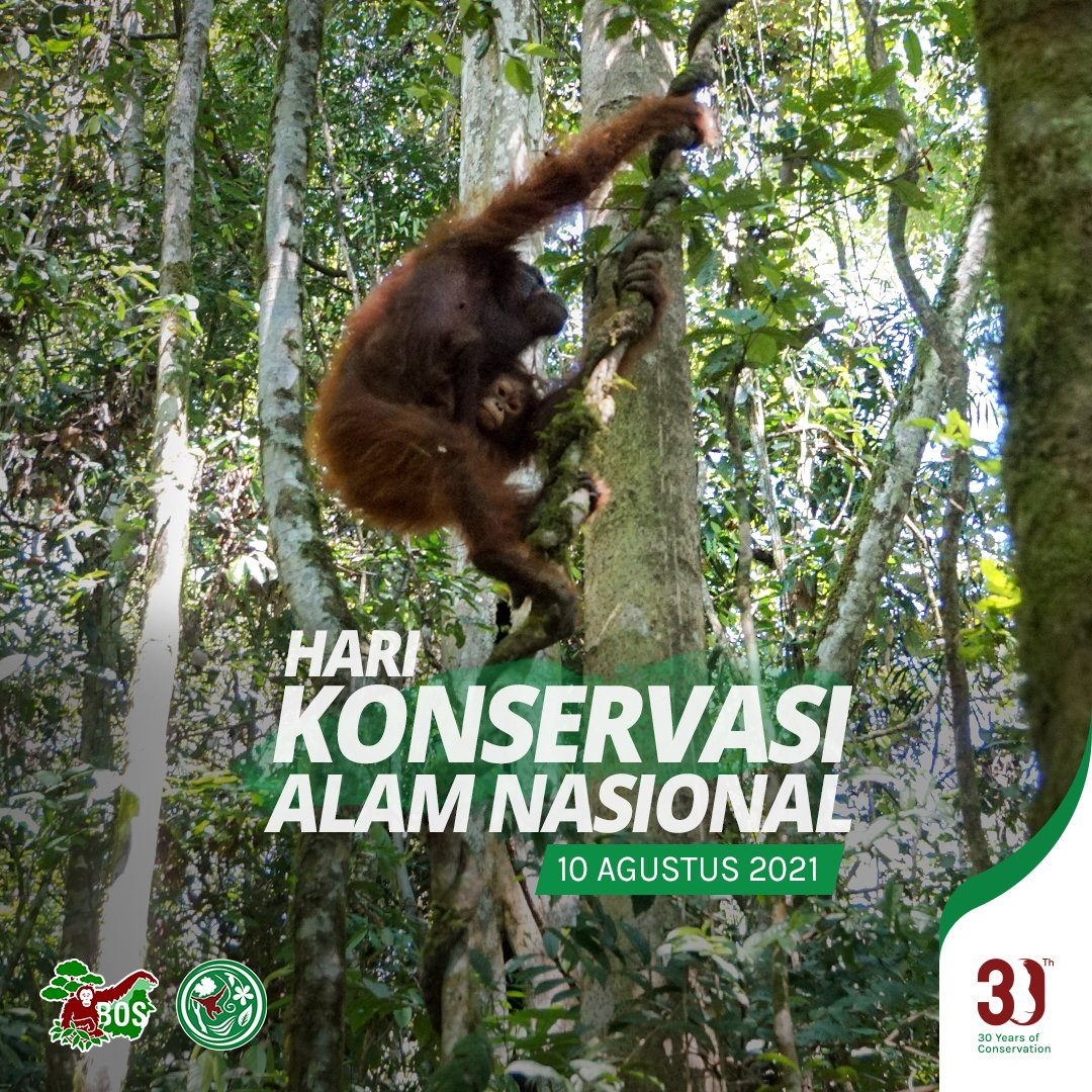 Indonesian National Nature Conservation Day, which falls on 10 August annually, reminds us to take care of our precious environment. Let's highlight the importance of #NatureConservation and the efforts required to protect the natural world around us! #HariKonservasiAlamNasional https://t.co/0HoscQRYZa