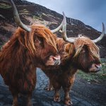 Image for the Tweet beginning: Happy Coosday ❤️  ⚠️ Please continue