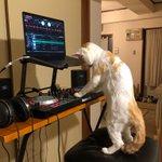 急に音楽が流れ出したと思ったら…猫ちゃんがDJになっていたw