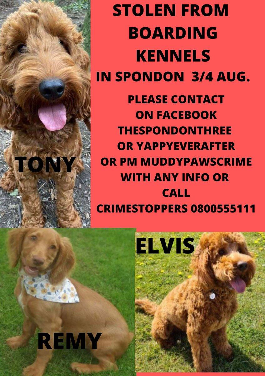 #spondon3  #thespondonthree #elvis #stolendogs #Tony #Remy #yappyeverafter TWITTERSTORM NOW