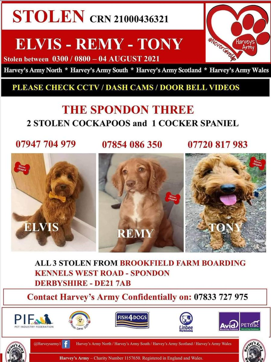 Three dogs stolen from kennels in Derby, including my five year old nephew's therapy dog. HELP BRING THEM HOME BY SHARING AND REPORTING ANY INFO. #Spondon3 #thespondonthree #stolendogs #elvis #tony #remy @benshephard @Benfogle @katehumble @GethincJones @louistheroux