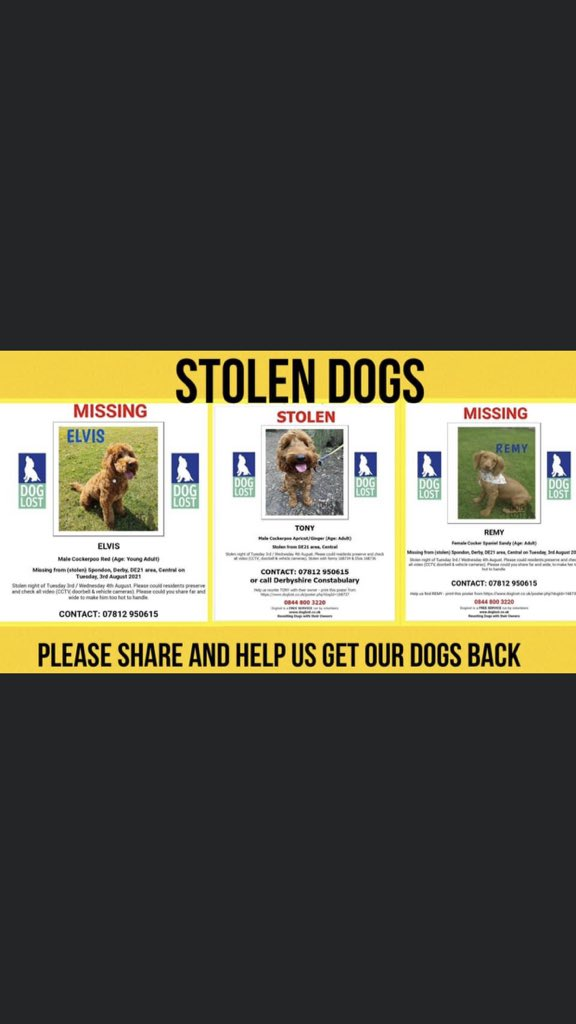 #PetTheftArmy  do your thing . Let's get these dogs shared all over the place . #Spondon3 @joynes85 @RSPCA_official @PeterEgan6 @rickygervais
