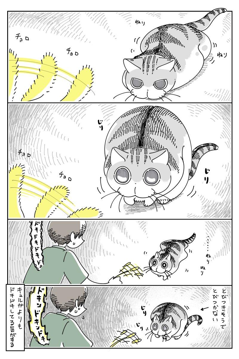 緊張感が凄そう・・・!おもちゃをロックオンするも、なかなか飛びついて来ない猫のお話!