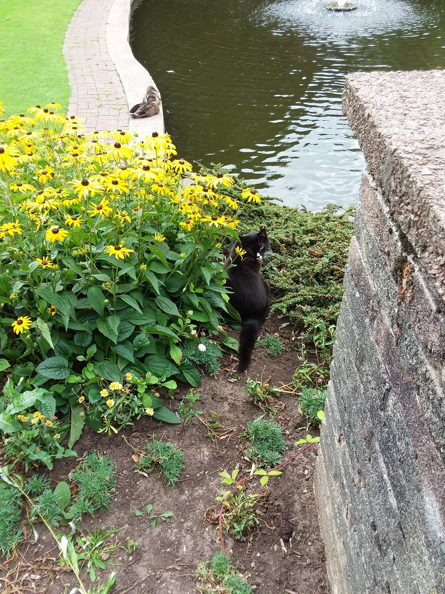 Mindy has been out and about the park today, checking in on the ducks.
