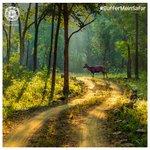 Image for the Tweet beginning: सतपुड़ा के घने जंगल। नींद मे