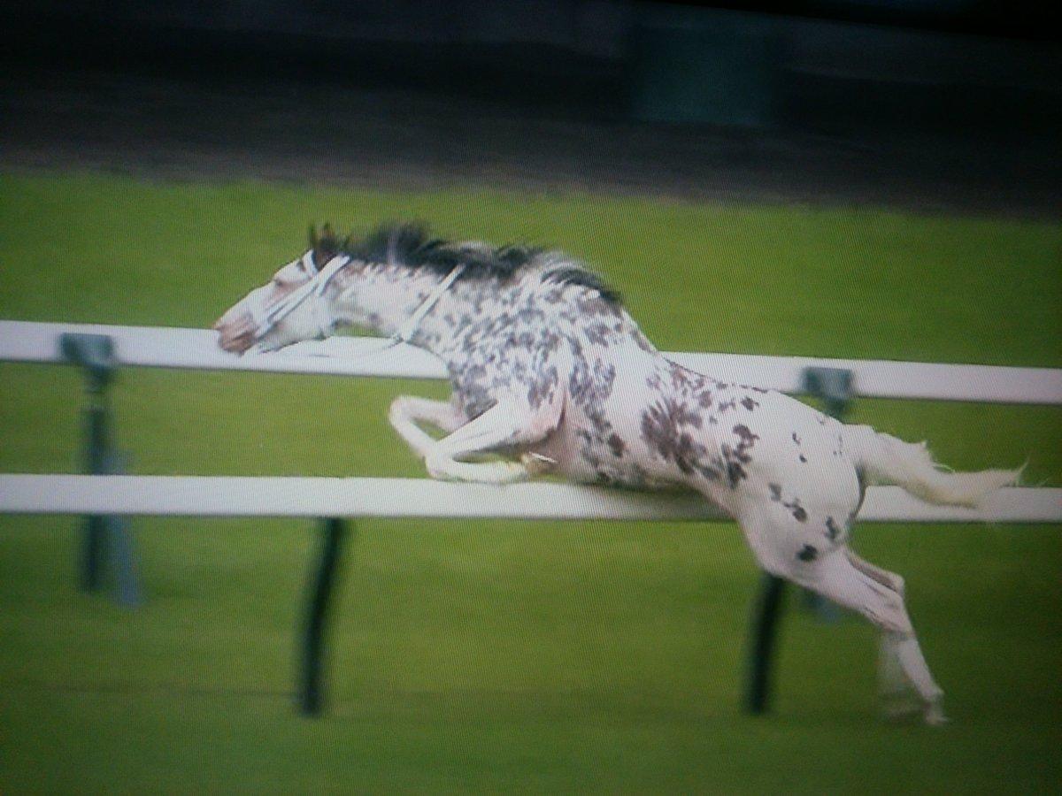 放馬してしまった競走馬、その後まさかの行動に出てしまう!