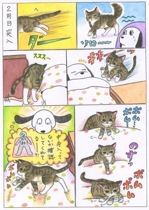 いきなり飛び込んできていた猫が?気を遣うようになった!