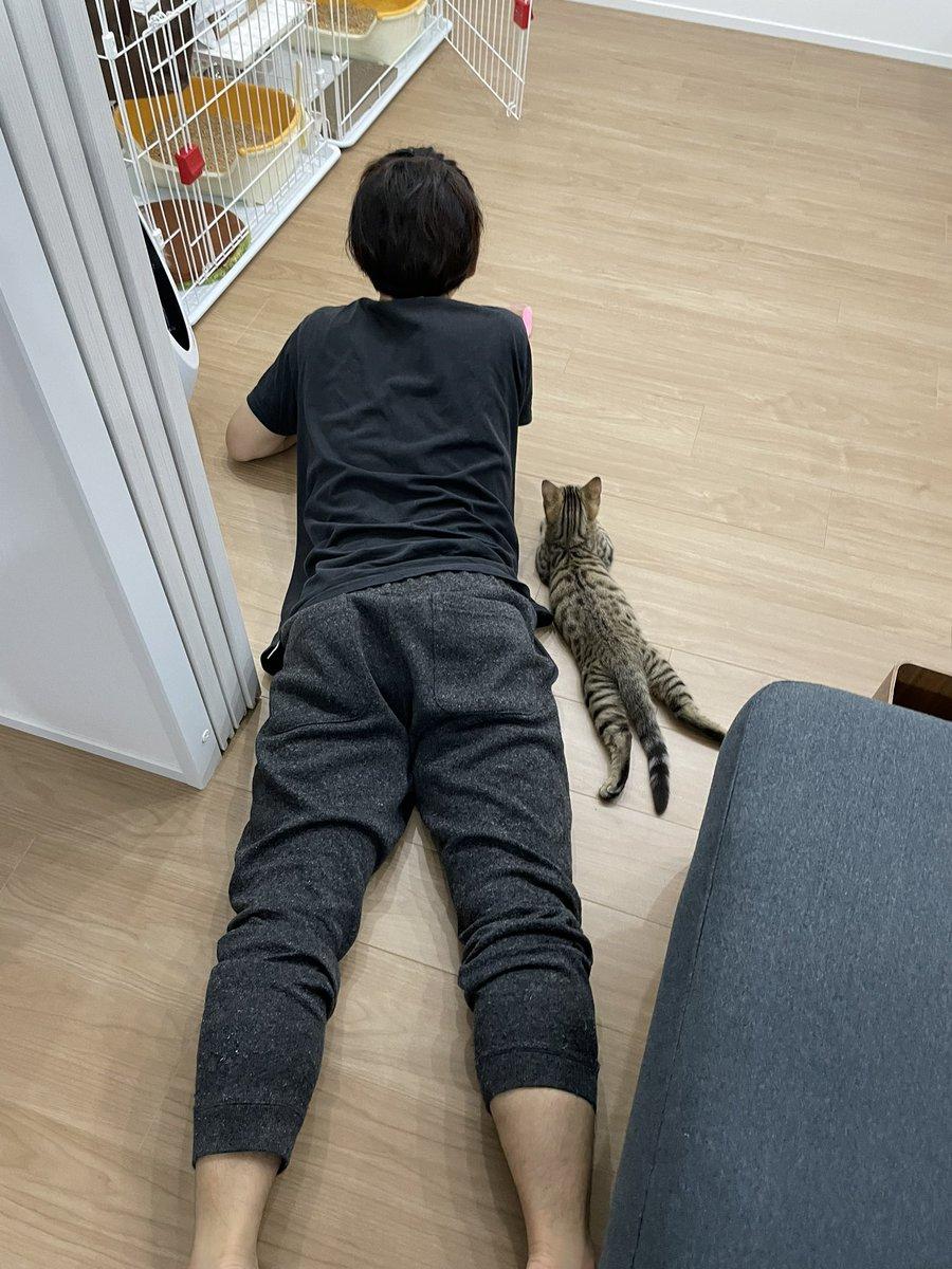 新入りネコちゃんがきたとき、人間のようにみているネコwきっと人間だと思っているはず
