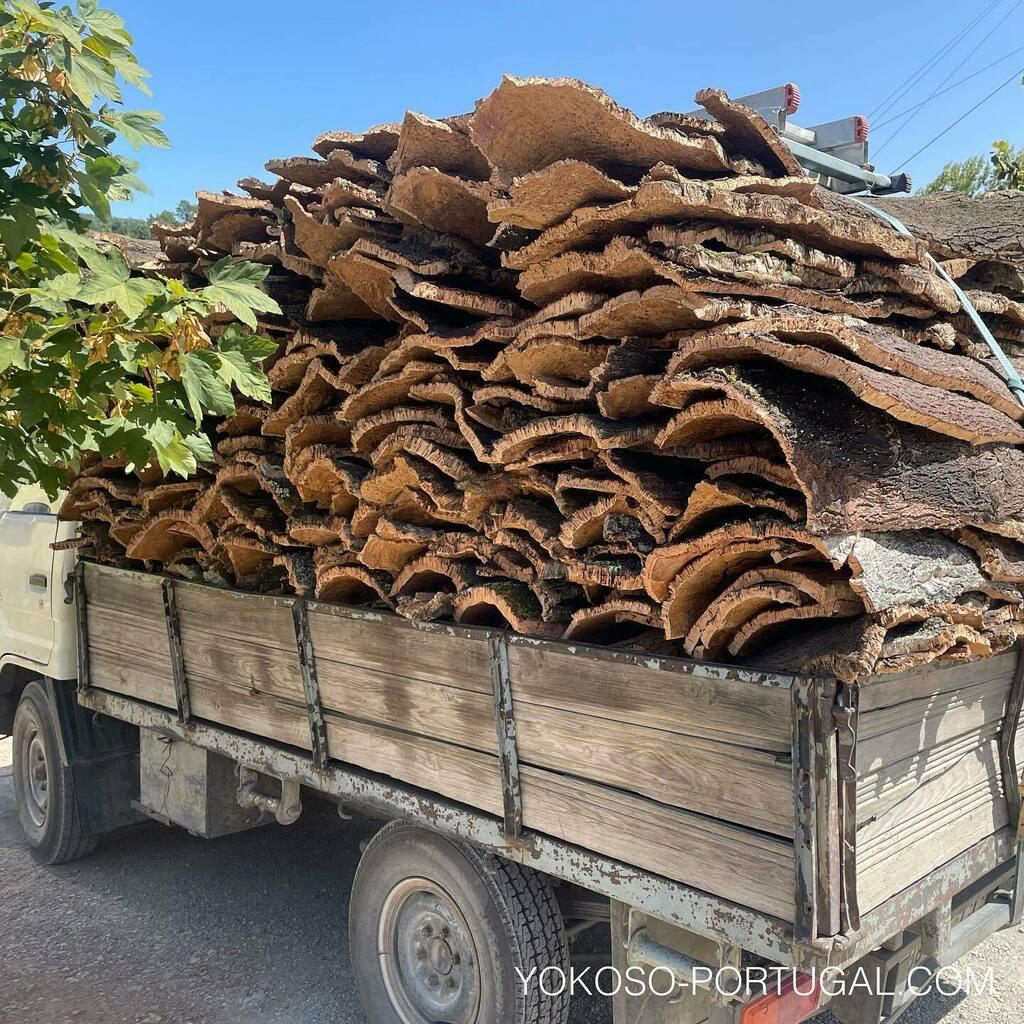 test ツイッターメディア - 剥がされたコルクの樹皮。ポルトガルは世界で使われるコルクの50%以上を生産しています。 #ポルトガル https://t.co/dxwEeLFgK7
