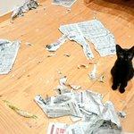 犯人はだれ?部屋中が新聞紙だらけに!満足気なネコ