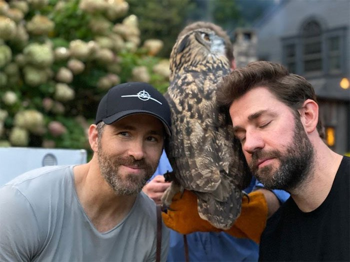 ... I'd do anything for that owl.  #FreeGuy