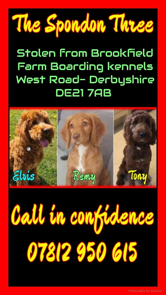 Today marks 2 weeks since Tony, Elvis and Remy were #stolen.  This day is particularly hard because today is Tony's First Birthday 💔
