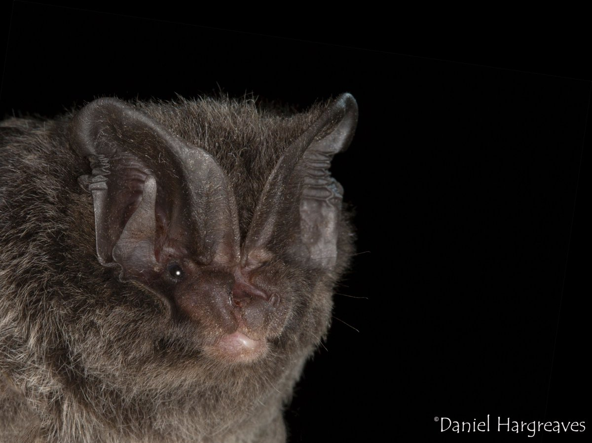 You have until 8th Sept to apply for this **FREE** course and travel bursary! What are you waiting for? #bats #molecular #genetics #ecosystemservices