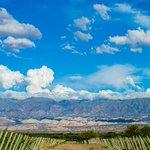 Image for the Tweet beginning: 🍷🍇 Los vinos tucumanos expresan